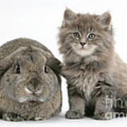 Rabbit And Kitten Art Print