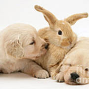 Rabbit And Puppies Art Print