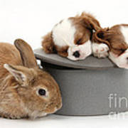 Rabbit And Spaniel Pups Art Print
