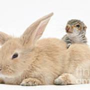 Rabbit And Squirrel Art Print