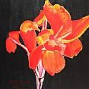 Red Canna Art Print