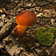 Red Caped Mushroom 3 Art Print
