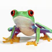Red Eyed Frog (agalychnis Callidryas) White Background Art Print