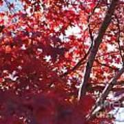 Red Leaves 2 Art Print