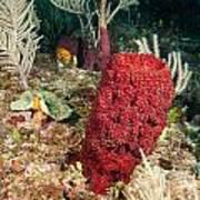 Red Sponge Art Print