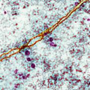 Ribosomes, Tem Art Print