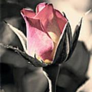 Rita Rosebud Pink Art Print