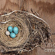 Robins Nest And Cowbird Egg Art Print