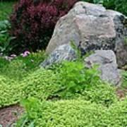 Rock Garden Art Print