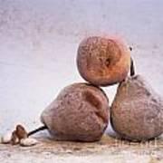 Rotten Pears And Apple. Print by Bernard Jaubert