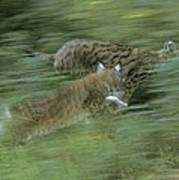 Running Lynx Art Print