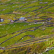 Rural Landscape On Dingle Peninsula Art Print