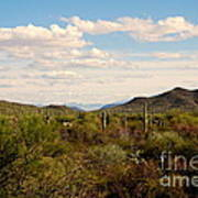 Saguaro National Park Az Art Print