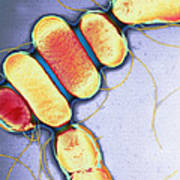 Salmonella, Tem Art Print by Henrik Chart, Centre For Infectionshealth Protection Agency