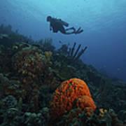 Scuba Diver Swims Underwater Amongst Art Print