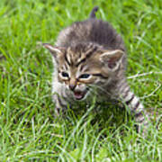 Small Kitten In The Grass Art Print