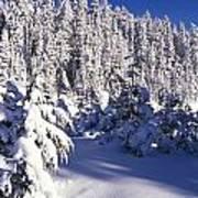 Snow-covered Pine Trees On Mount Hood Art Print