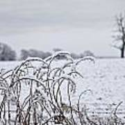 Snow Covered Trees And Field Print by John Short