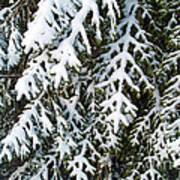 Snowy Fir Tree Art Print