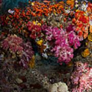 Soft Coral In Raja Ampat, Indonesia Art Print