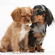 Spaniel & Dachshund Puppies Art Print