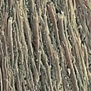 Spinal Cord, Sem Art Print