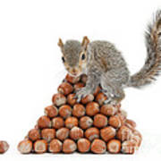 Squirrel And Nut Pyramid Art Print