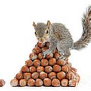 Squirrel And Nut Pyramid Art Print