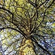 Stalwart Pine Tree Art Print