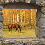 Stone Window View And Beautiful Horse Art Print
