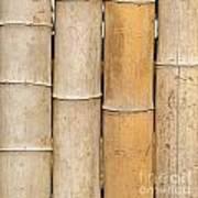 Straight Bamboo Poles Art Print by Yali Shi