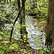 Stream Monongahela National Forest Art Print