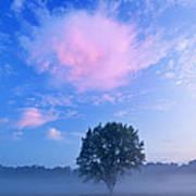 Summer Meadow At Dawn Art Print