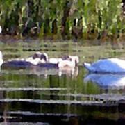 Swans In Hue Pallet Art Print