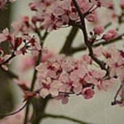 Sweet Spring Print by Terrie Taylor