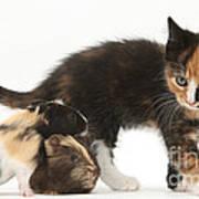 Tortoiseshell Kitten With Baby Art Print