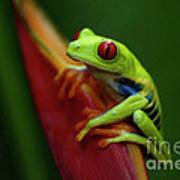 Tree Frog 19 Art Print