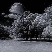 Trees At The Carabobo Field Art Print
