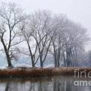 Trees On The Lake Front Art Print
