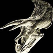 Triceratops Dinosaur Skull Art Print