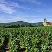 Vineyard. Regnie-durette. Beaujolais Wine Growing Area. Departement Rhone. Region Rhone-alpes. Franc Art Print