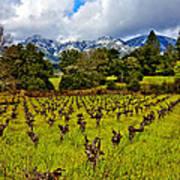 Vineyards And Mt St. Helena Art Print