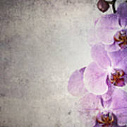 Vintage Orchids Art Print