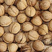 Walnuts Art Print