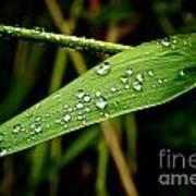 Water Drops On Blade Of Grass Art Print
