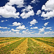 Wheat Farm Field At Harvest In Saskatchewan Art Print by Elena Elisseeva