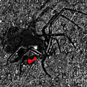 Wicked Widow - Selective Color Art Print