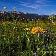 Wildflower Meadows And The Anthracite Range Art Print