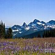 Wildflowers In The Cascades Art Print