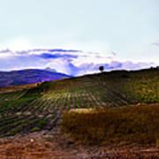 Wine Vineyard In Sicily Art Print